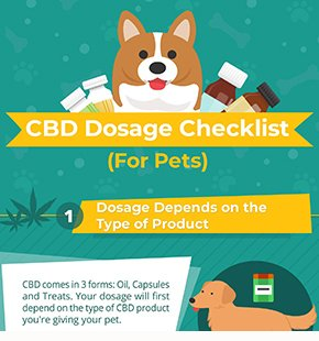 Best CBD Oil for Dogs - The Top 4 CBD Tinctures for Pets You